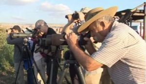 israel bird watching